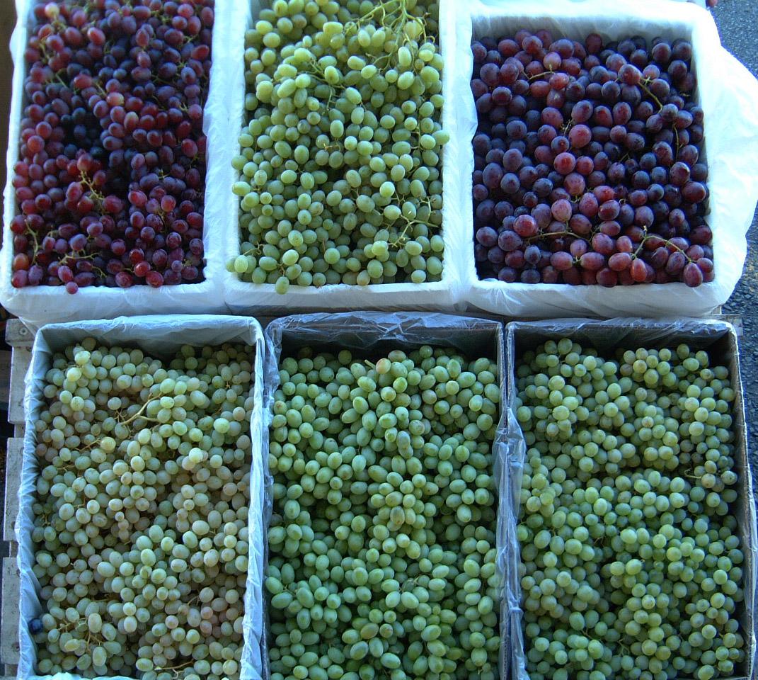 Brisbane Markets Sherwood Road Rocklea Queensland 4106 grapes I01