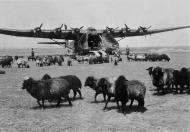 Asisbiz Luftwaffe heavy transport aircraft Messerschmitt Me 323 awaits its next assigment 01