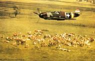 Asisbiz Bf 109F RHAF experimental camouflage scheme 02