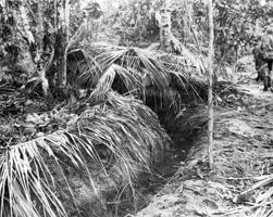 Japanese coconut bunker