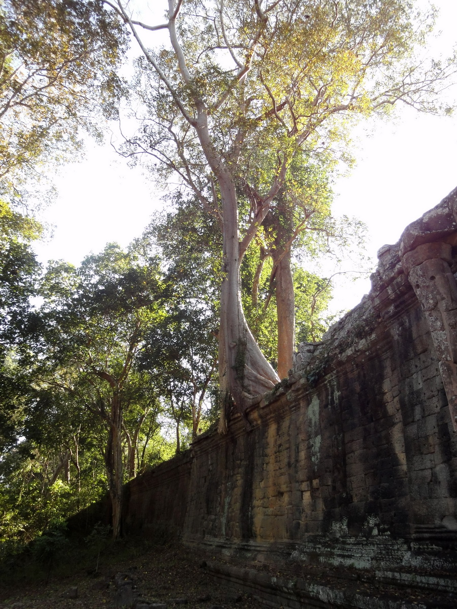 Victory Gate laterite walls with giant trees Jan 2010 01
