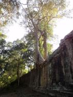 Asisbiz Victory Gate laterite walls with giant trees Jan 2010 01