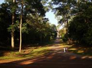 Asisbiz Angkor Wat Temple inner E area giant trees Angkor Siem Reap 03