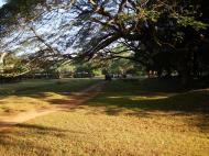 Asisbiz Angkor Wat Temple inner E area giant trees Angkor Siem Reap 04