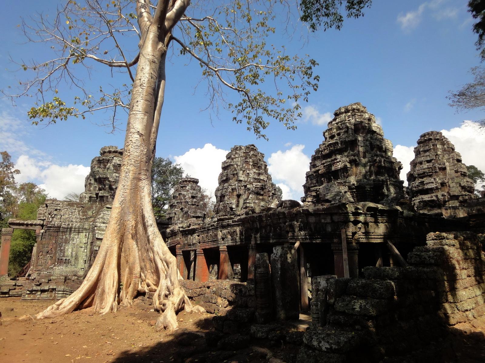 D Banteay Kdei Temple western entrance giant tree 02