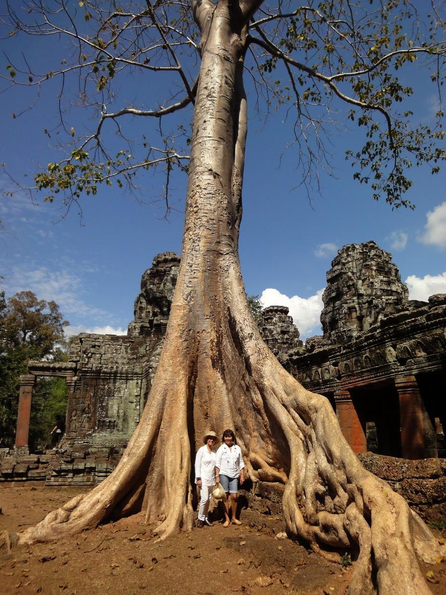 D Banteay Kdei Temple western entrance giant tree 04