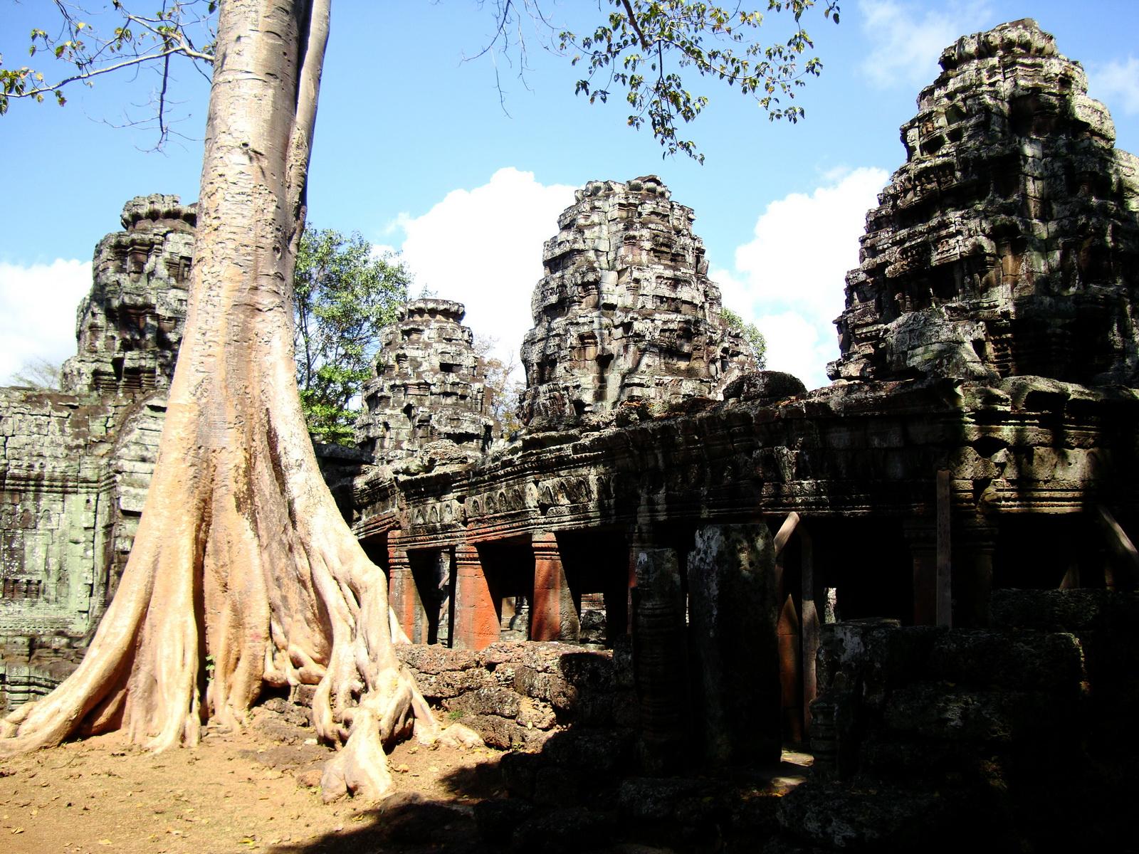 D Banteay Kdei Temple western entrance giant tree 07