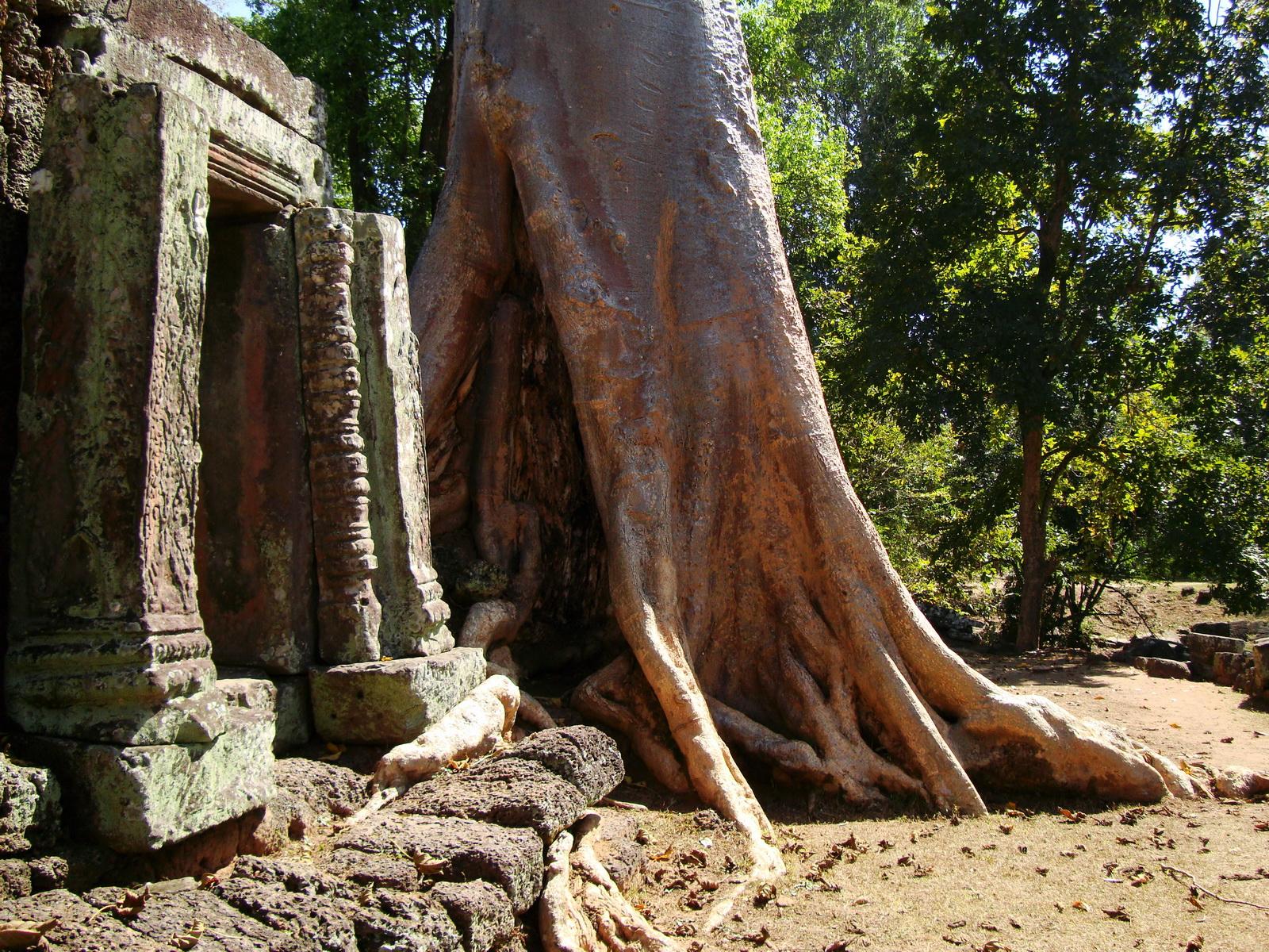 D Banteay Kdei Temple western entrance giant tree 09