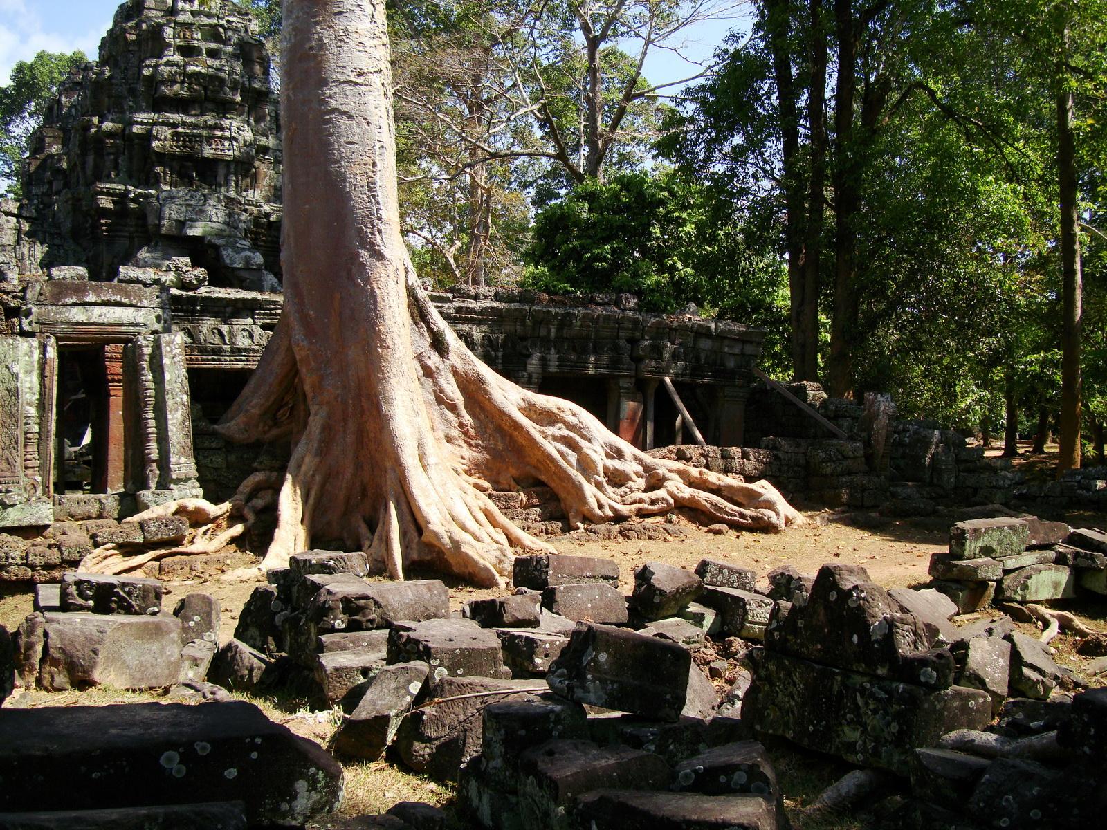 D Banteay Kdei Temple western entrance giant tree 10