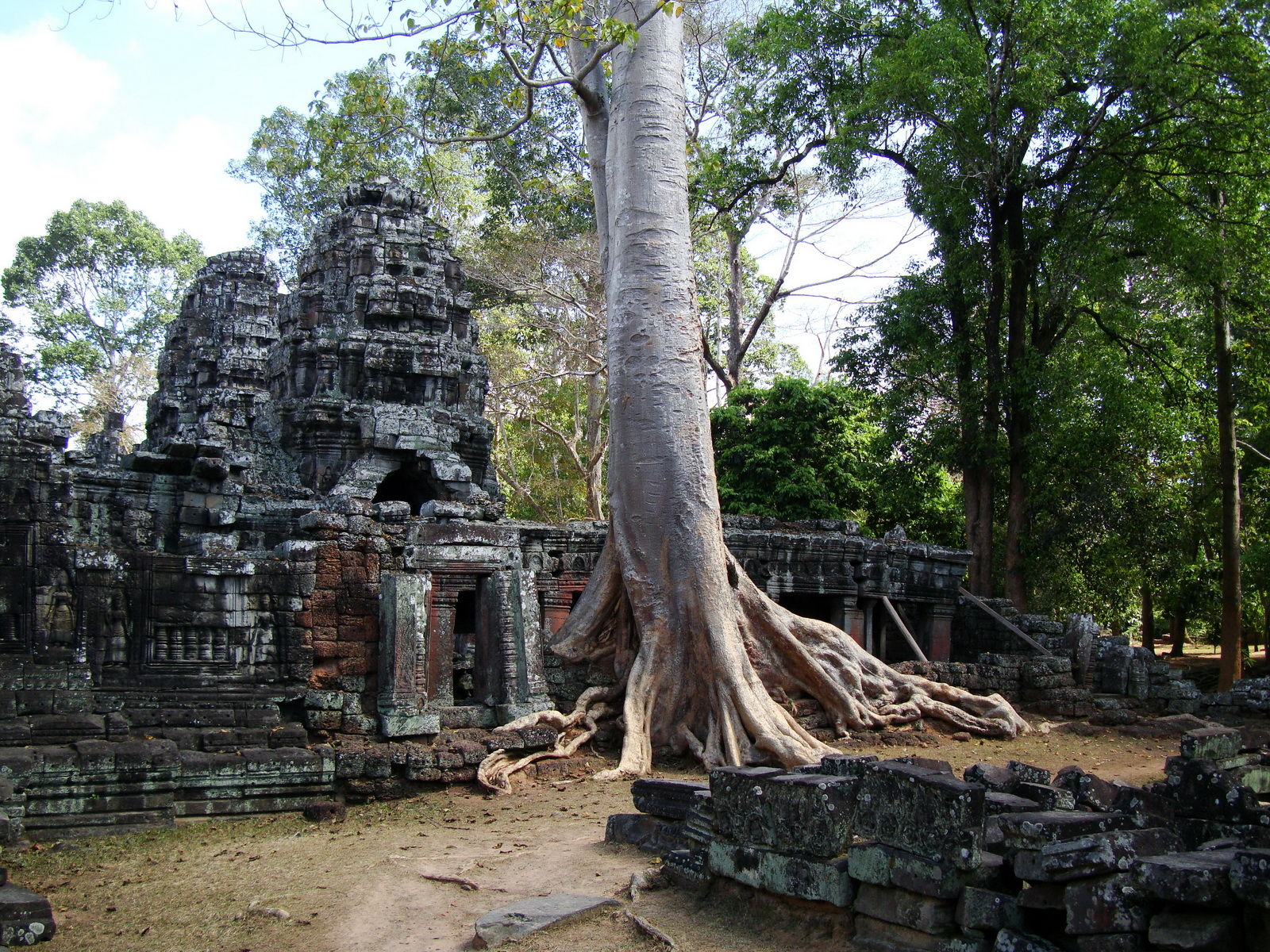 D Banteay Kdei Temple western entrance giant tree 11