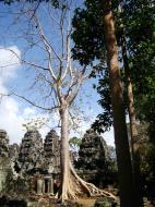 Asisbiz D Banteay Kdei Temple Gopuram Western Entry towers Angkor 03