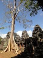 Asisbiz D Banteay Kdei Temple western entrance giant tree 03