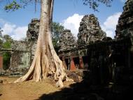 Asisbiz D Banteay Kdei Temple western entrance giant tree 06