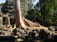 Asisbiz D Banteay Kdei Temple western entrance giant tree 10