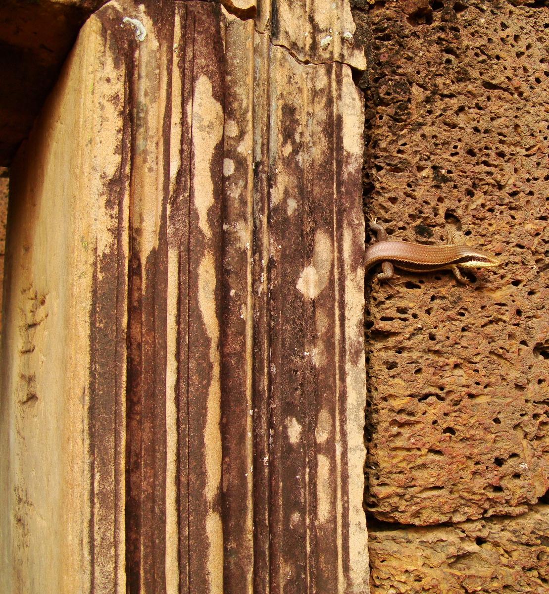 Banteay Srei Hindu Temple lizard Jan 2010 01