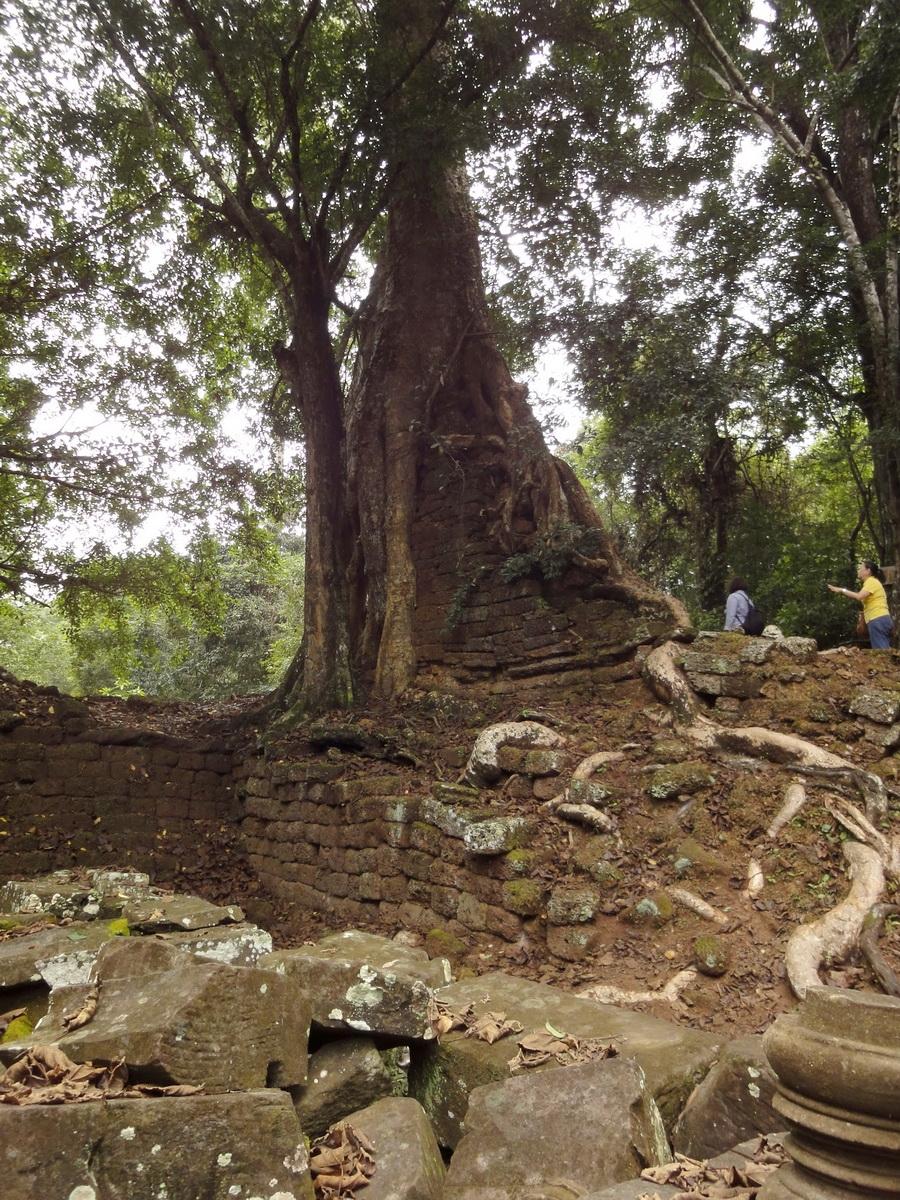 Royal Palace giant trees Angkor Cambodia Jan 2010 01
