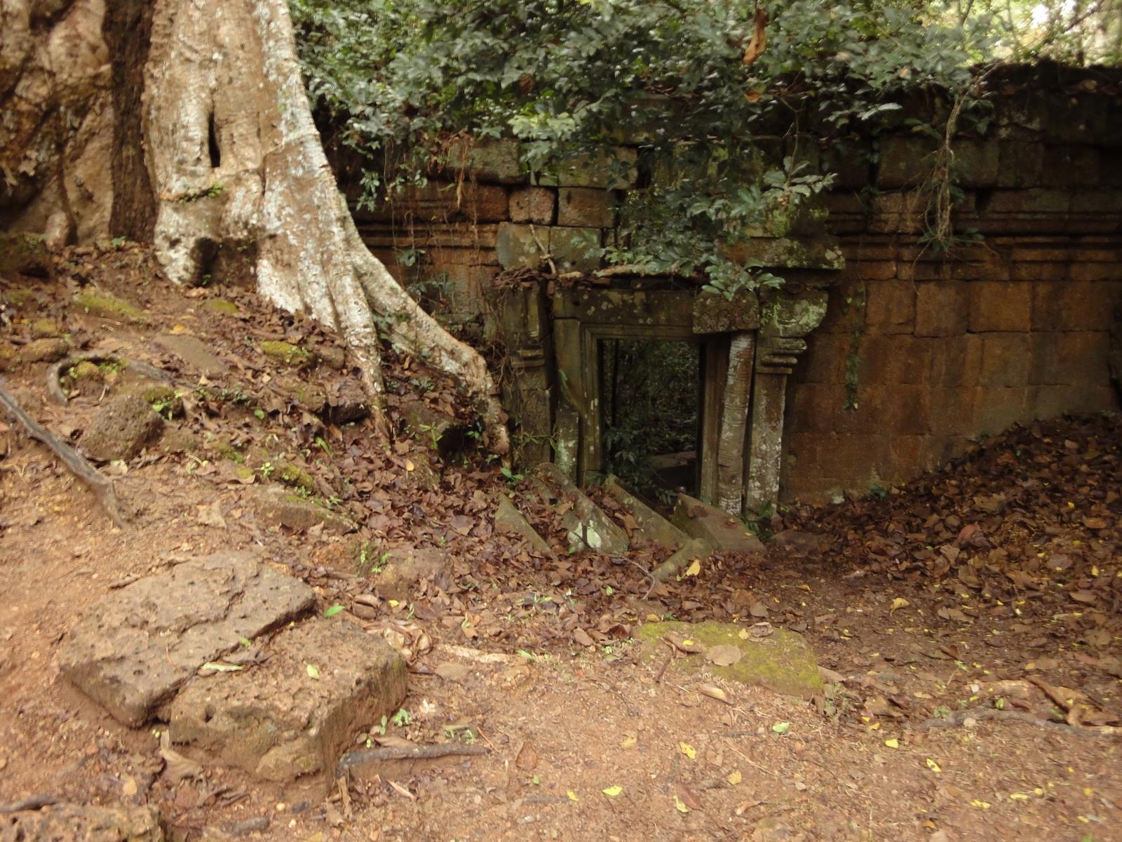 Royal Palace giant trees Angkor Cambodia Jan 2010 03