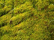 Asisbiz Phimeanakas moss covered stones marked for restoration 01