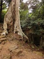 Asisbiz Royal Palace giant trees Angkor Cambodia Jan 2010 02