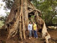 Asisbiz Royal Palace giant trees Angkor Cambodia Jan 2010 05