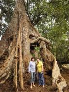 Asisbiz Royal Palace giant trees Angkor Cambodia Jan 2010 06