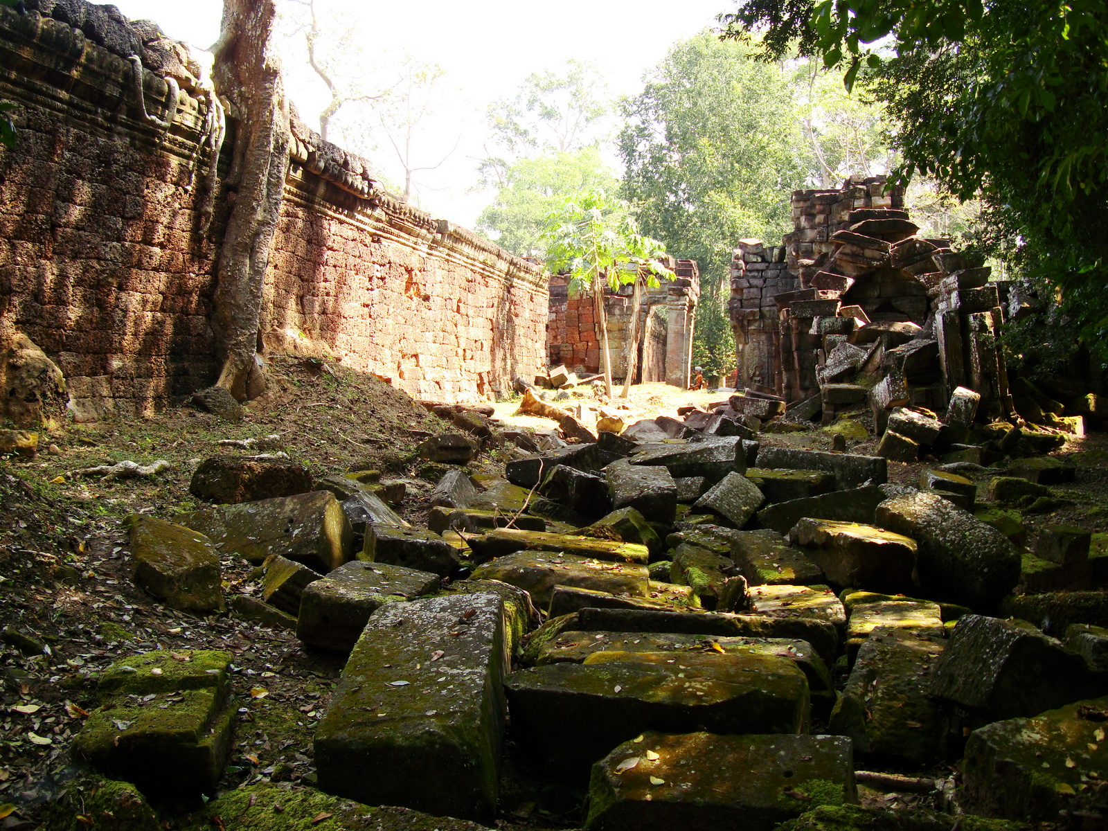 Preah Khan Temple laterite walls overtaken by giant strangler fig trees 05