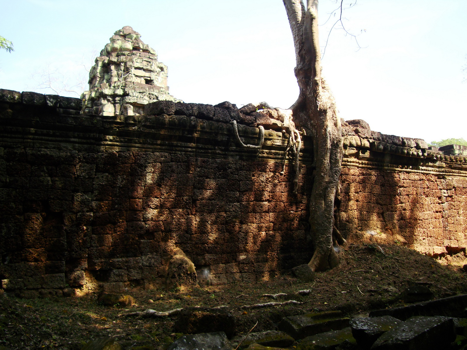 Preah Khan Temple laterite walls overtaken by giant strangler fig trees 06