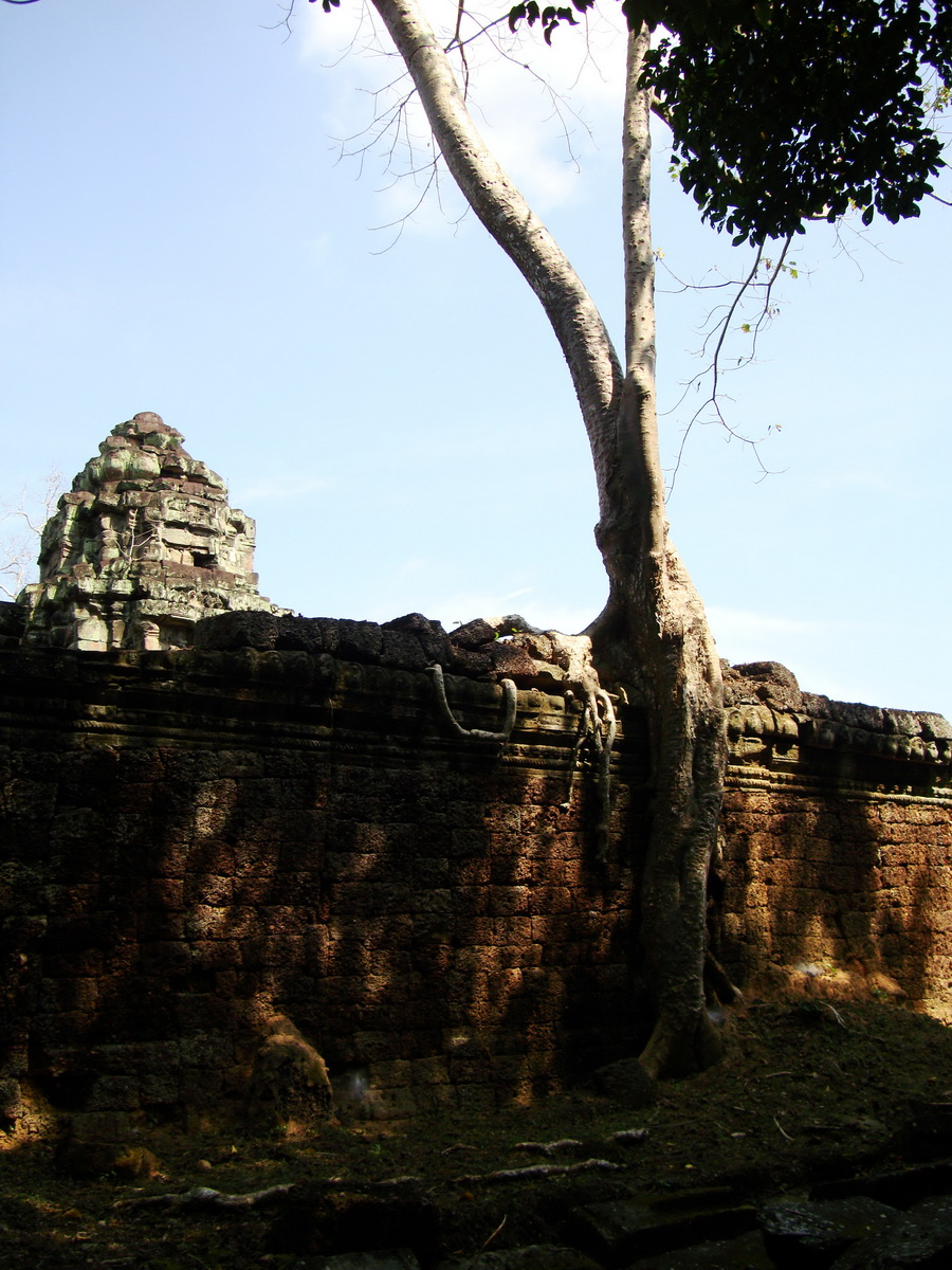 Preah Khan Temple laterite walls overtaken by giant strangler fig trees 07
