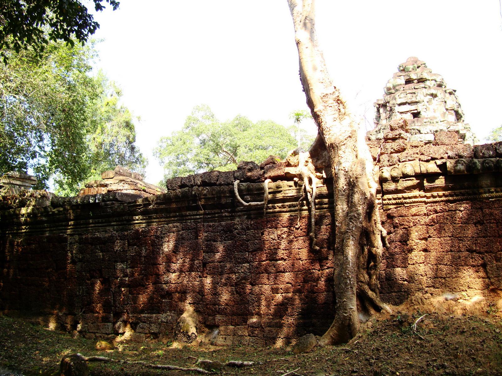 Preah Khan Temple laterite walls overtaken by giant strangler fig trees 08