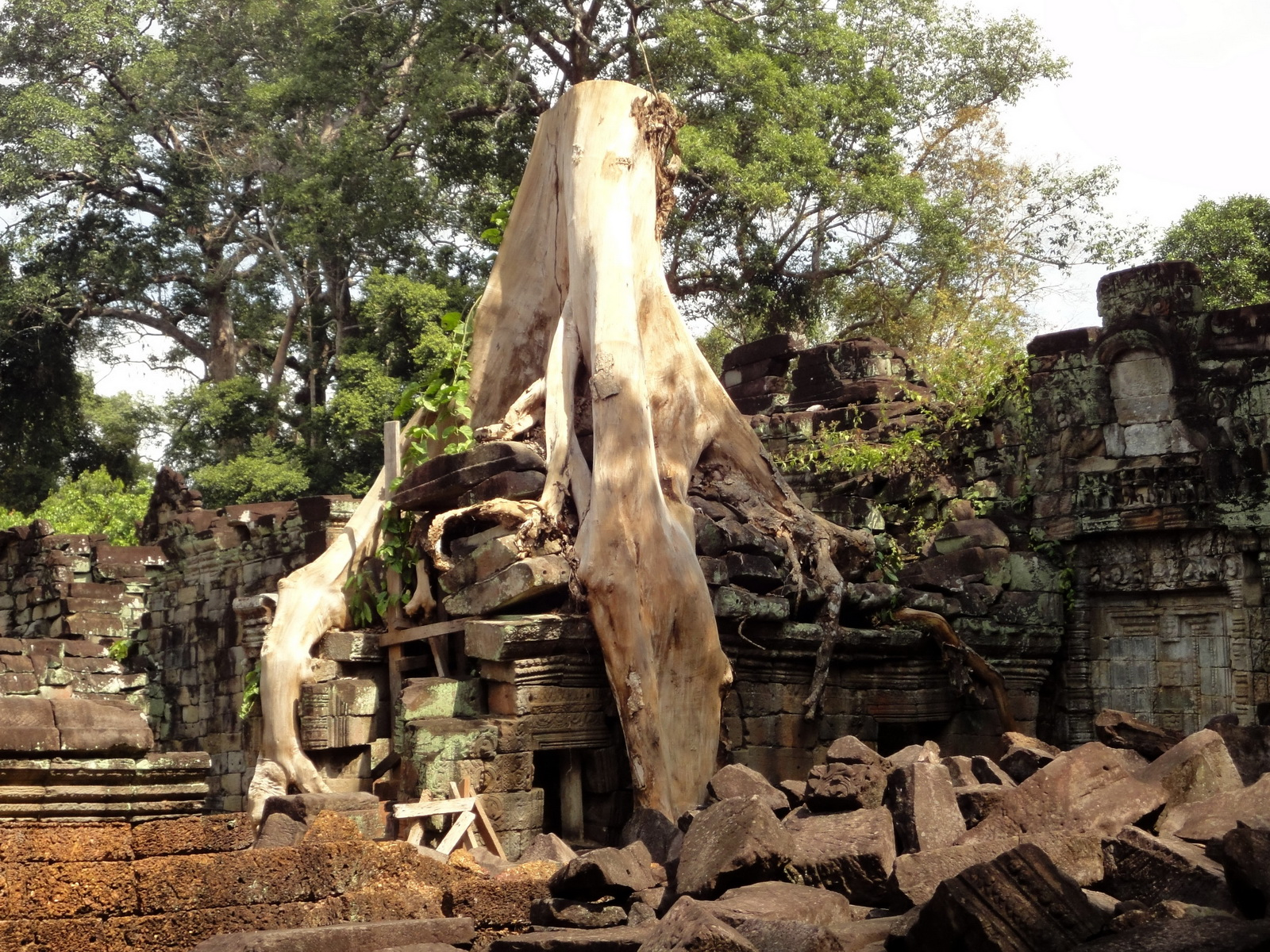 Preah Khan Temple laterite walls overtaken by giant strangler fig trees 12