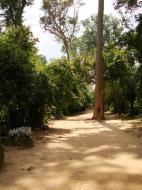 Asisbiz Preah Khan Temple giant tree along the pathway Angkor Thom 01