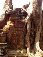 Asisbiz Preah Khan Temple laterite walls overtaken by giant strangler fig trees 04