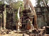 Asisbiz Preah Khan Temple laterite walls overtaken by giant strangler fig trees 11