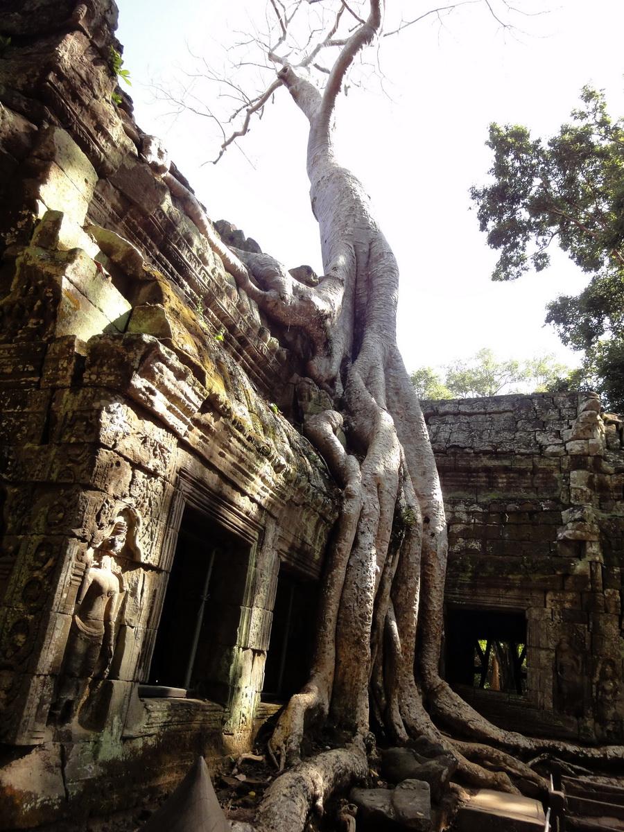 Ta Prohm Temple Rajavihara Tomb Raider NW corner Gopura 4 East 01