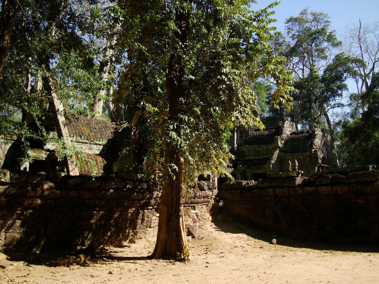 Ta Prohm Temple Rajavihara Tomb Raider W 4 Gopura area 04