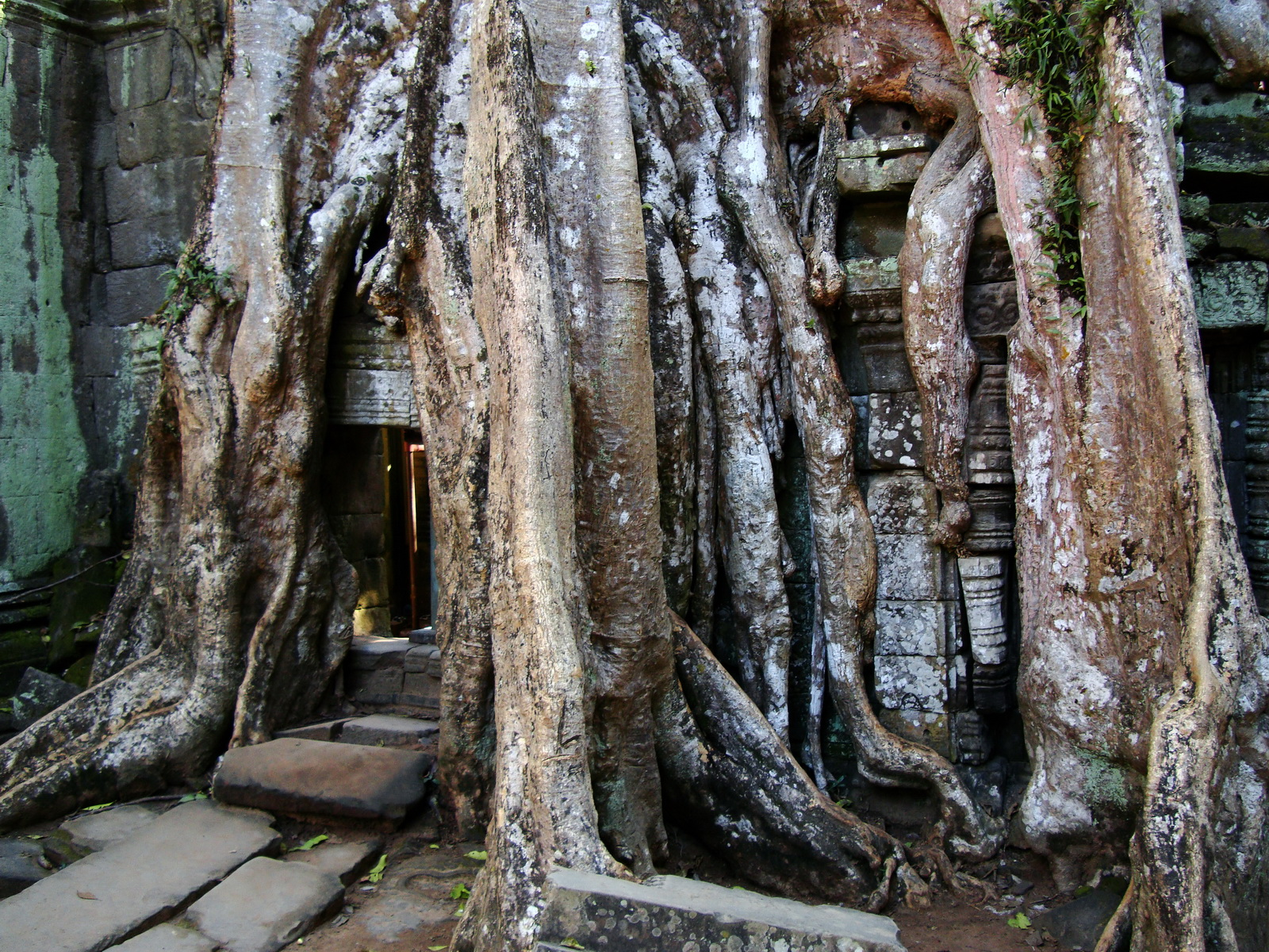 Ta Prohm Temple Tomb Raider giant iconic trees dwaf the gopura 02