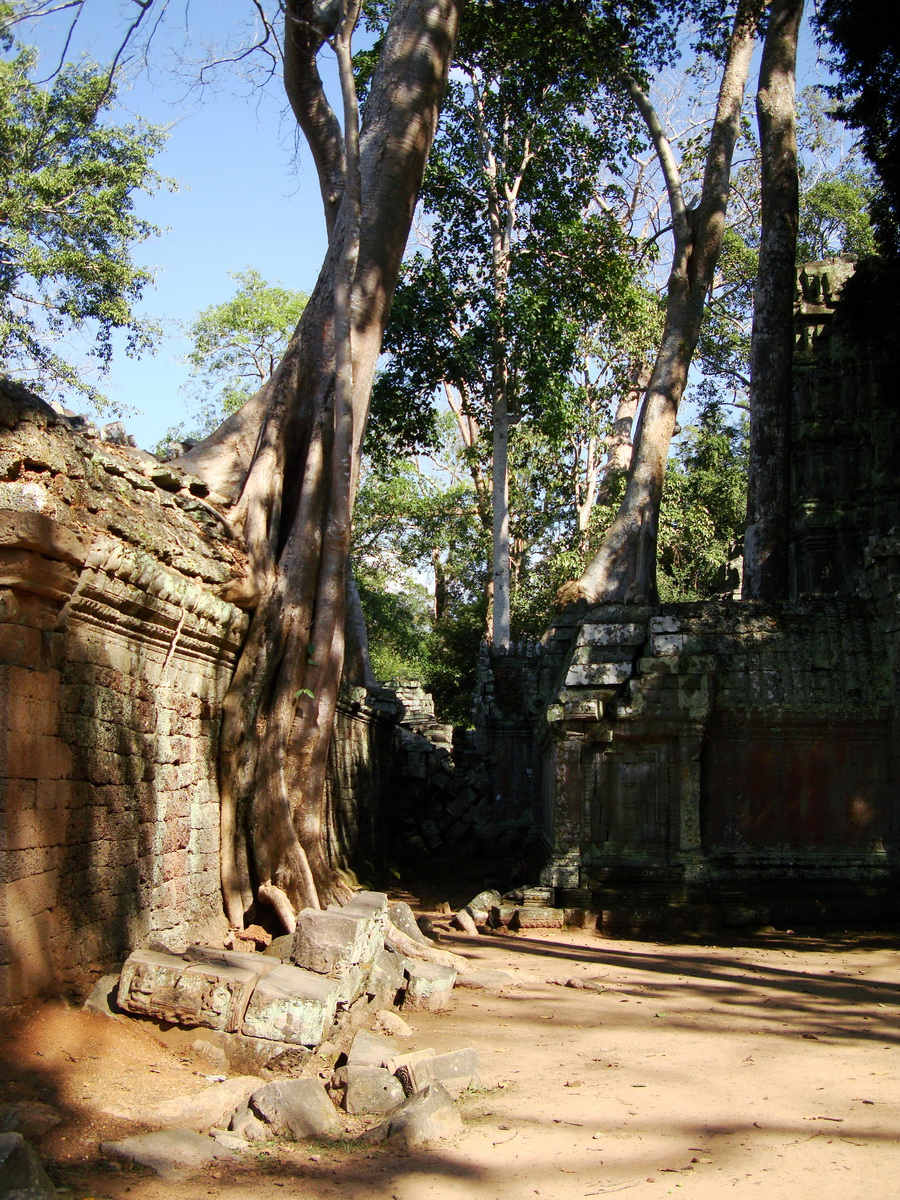 Ta Prohm Temple Tomb Raider giant iconic trees dwaf the gopura 05