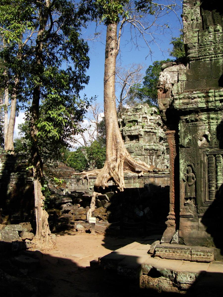 Ta Prohm Temple Tomb Raider giant iconic trees dwaf the gopura 09