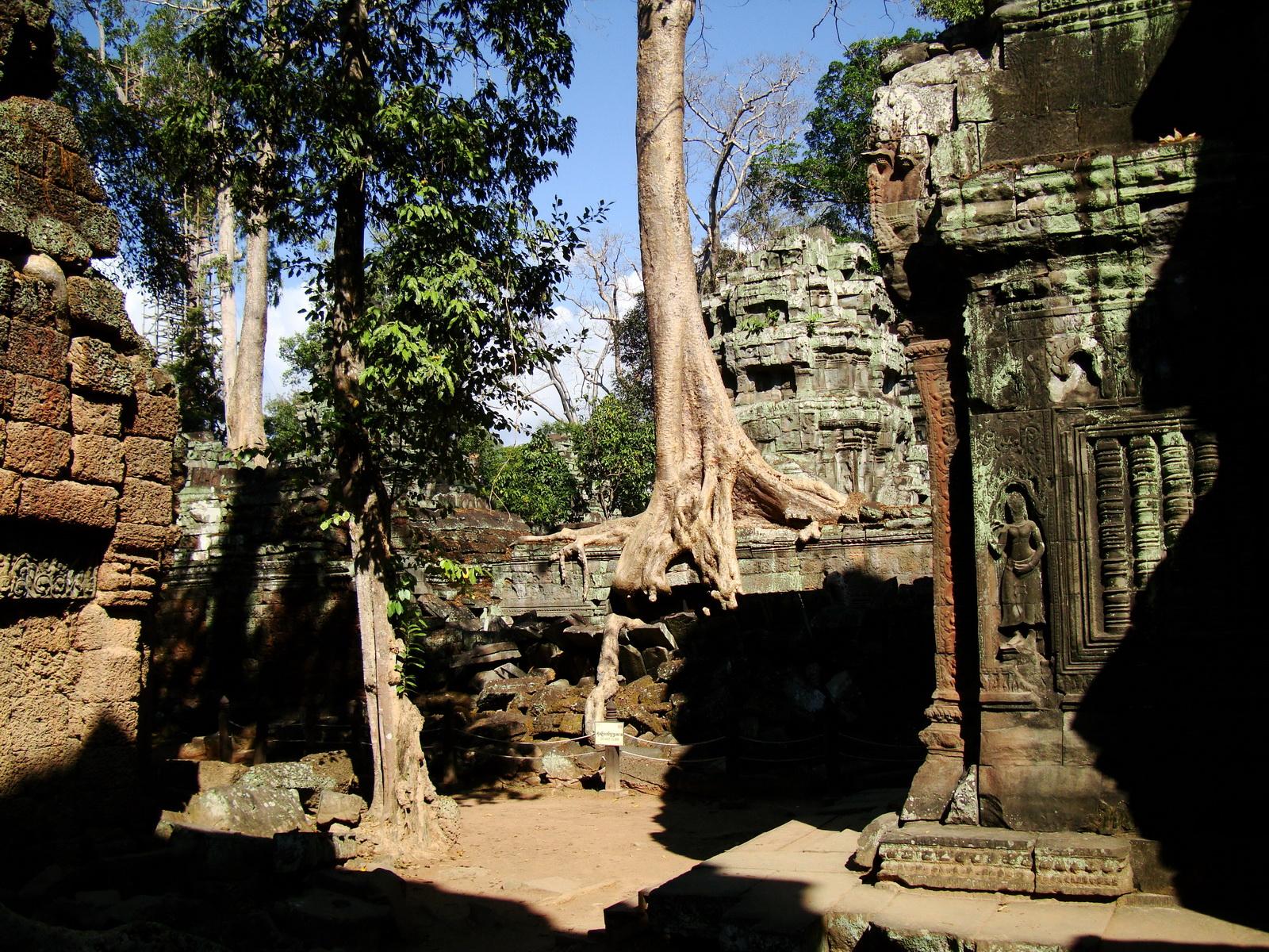 Ta Prohm Temple Tomb Raider giant iconic trees dwaf the gopura 10
