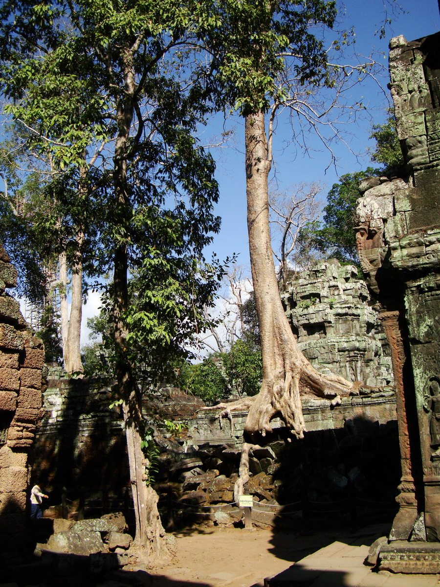 Ta Prohm Temple Tomb Raider giant iconic trees dwaf the gopura 12