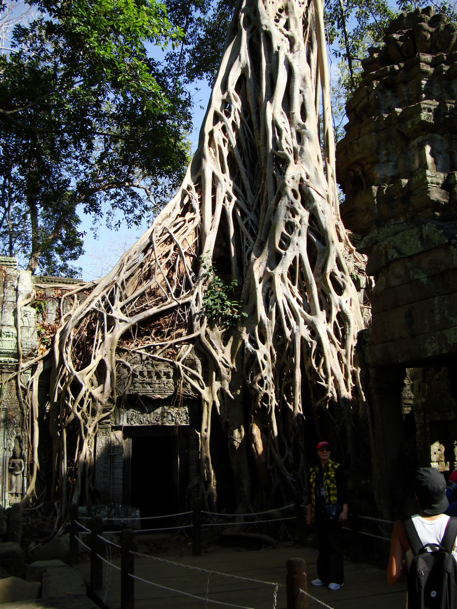 Ta Prohm Temple Tomb Raider giant strangler fig trees dwaf the gopura 01