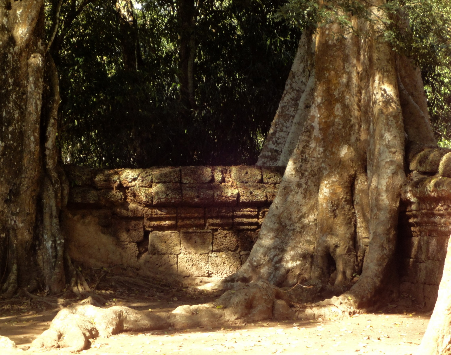 Ta Prohm Temple Tomb Raider giant trees dwaf the laterite walls 06