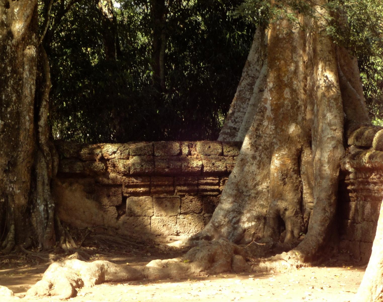 Ta Prohm Temple Tomb Raider giant trees dwaf the laterite walls 06