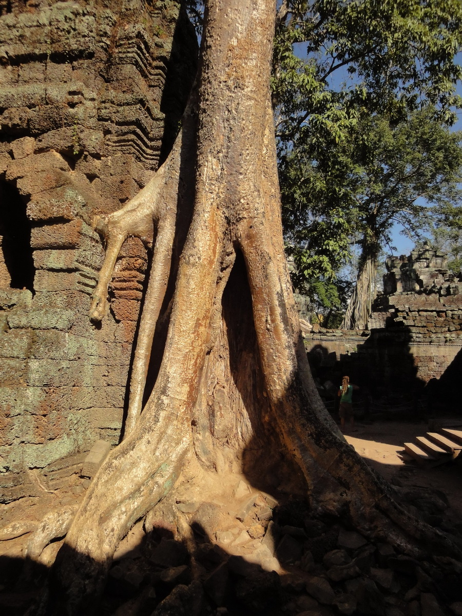 Ta Prohm Temple Tomb Raider giant trees dwaf the laterite walls 07