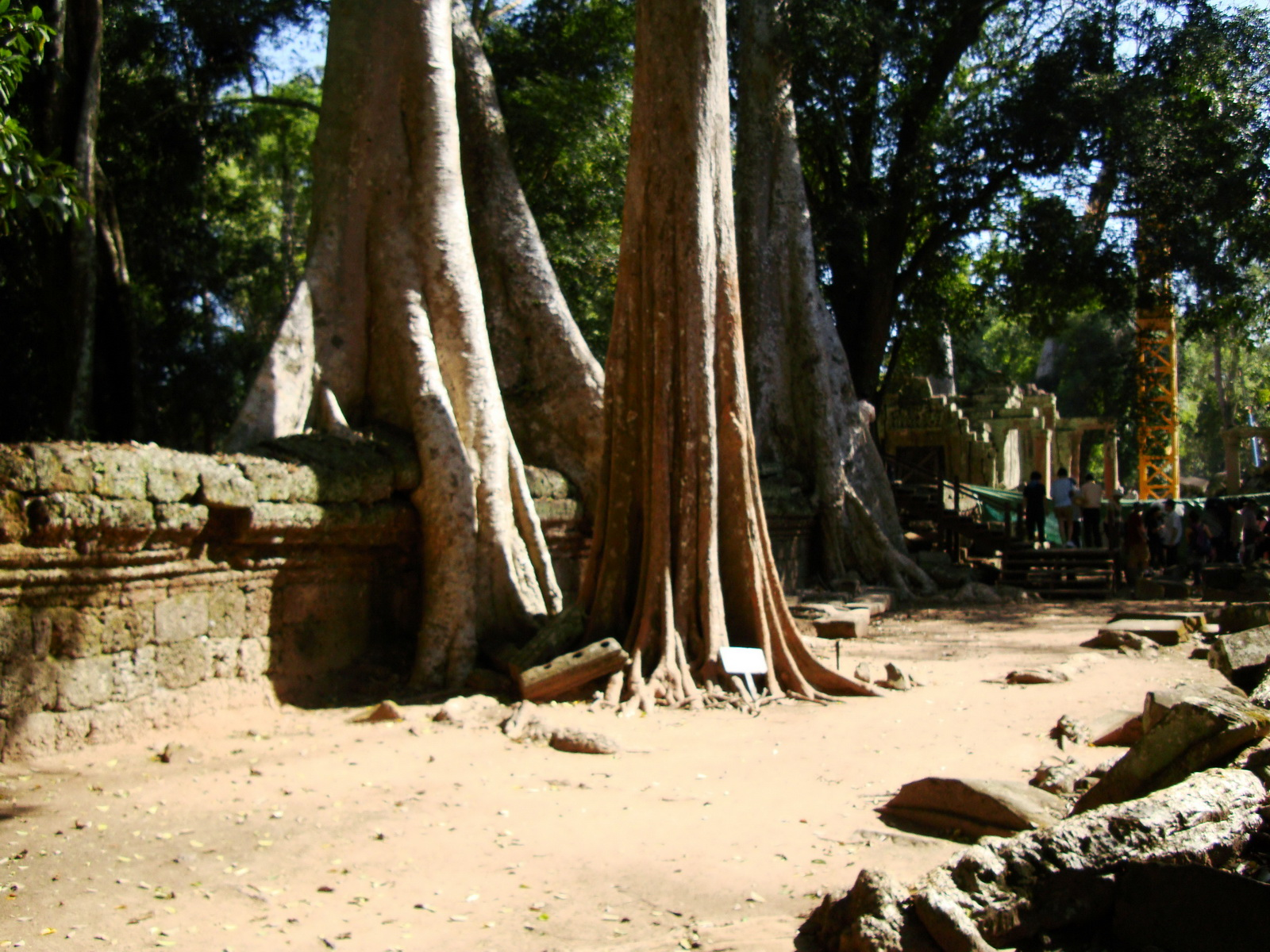 Ta Prohm Temple Tomb Raider giant trees dwaf the laterite walls 10
