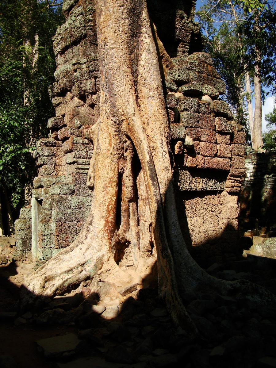 Ta Prohm Temple Tomb Raider giant trees dwaf the laterite walls 13