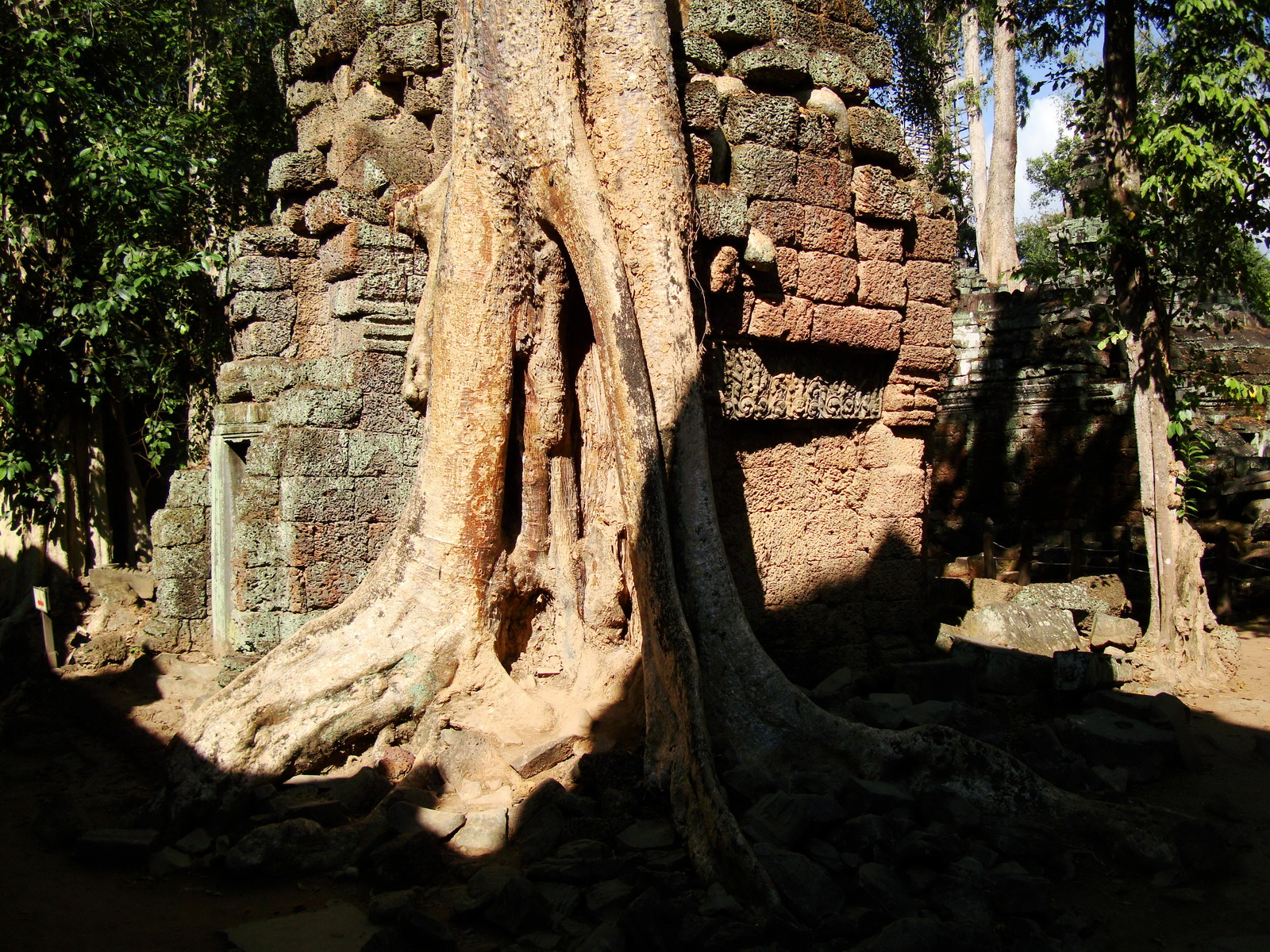 Ta Prohm Temple Tomb Raider giant trees dwaf the laterite walls 14