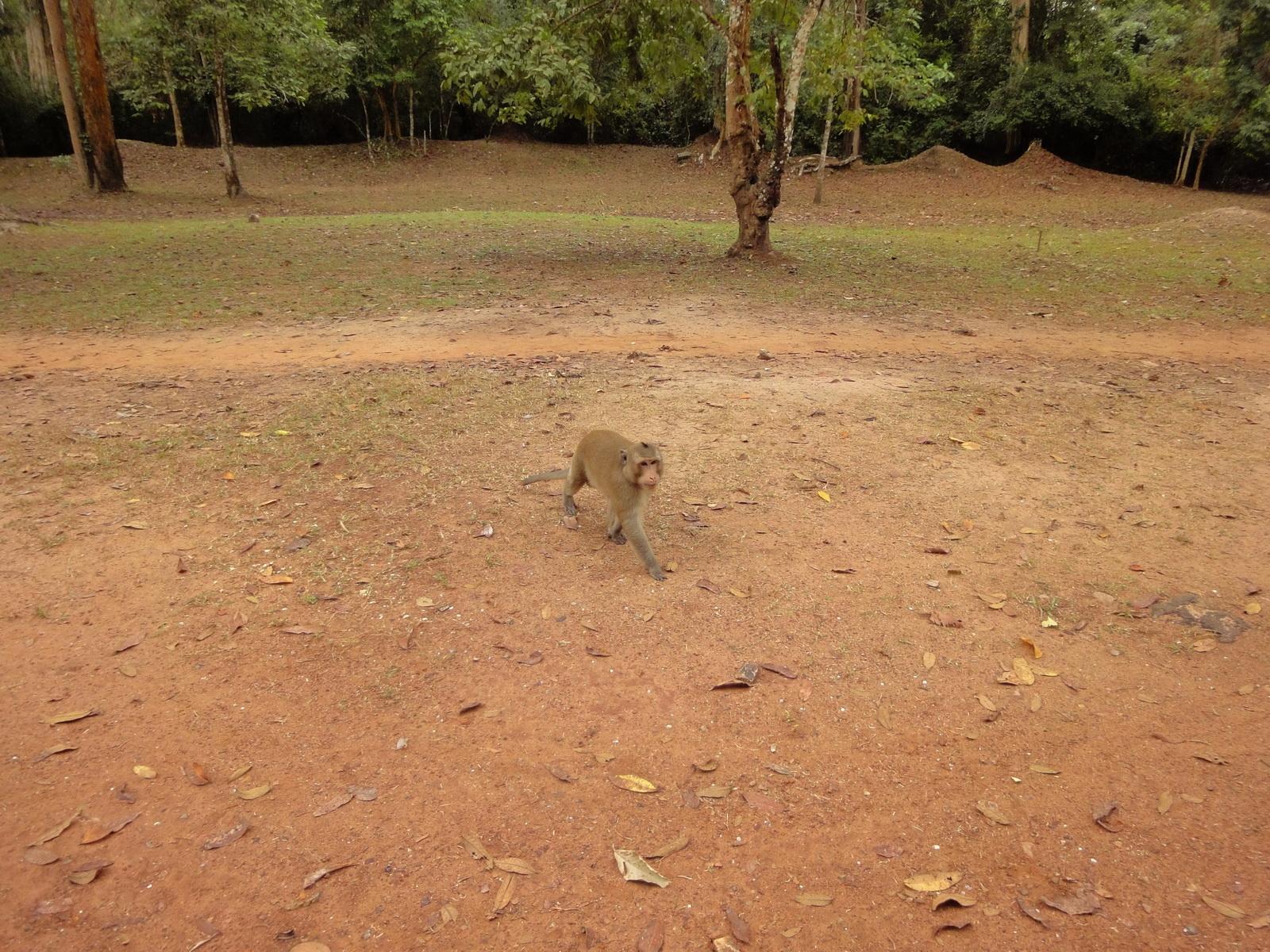 Terrace of the Elephants wild monkeys Cambodia 01