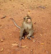 Asisbiz Terrace of the Elephants wild monkeys Cambodia 02
