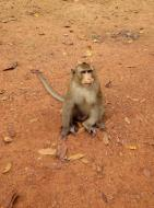 Asisbiz Terrace of the Elephants wild monkeys Cambodia 03